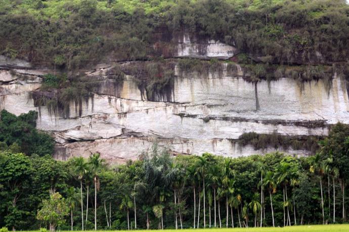 Di sisi tebing yang nyaris tegak lurus ini banyak ditumbuhi pohon-pohon besar. Saya mengambil gambar ini dari jalan raya pada jarak lebih dari 2 km. Dengan lensa tele bagian atas dari tebing ini masih ada lagi, yang tidak terlihat di gambar ini. Coba bandingkan dengan tinggi pohon kelapa yang bereret dibawah tebing, bisa bayangkan ketinggiannya kan ?